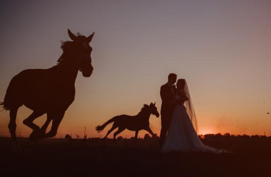sesja ślubna Pauliny i Kacpra galopujące konie